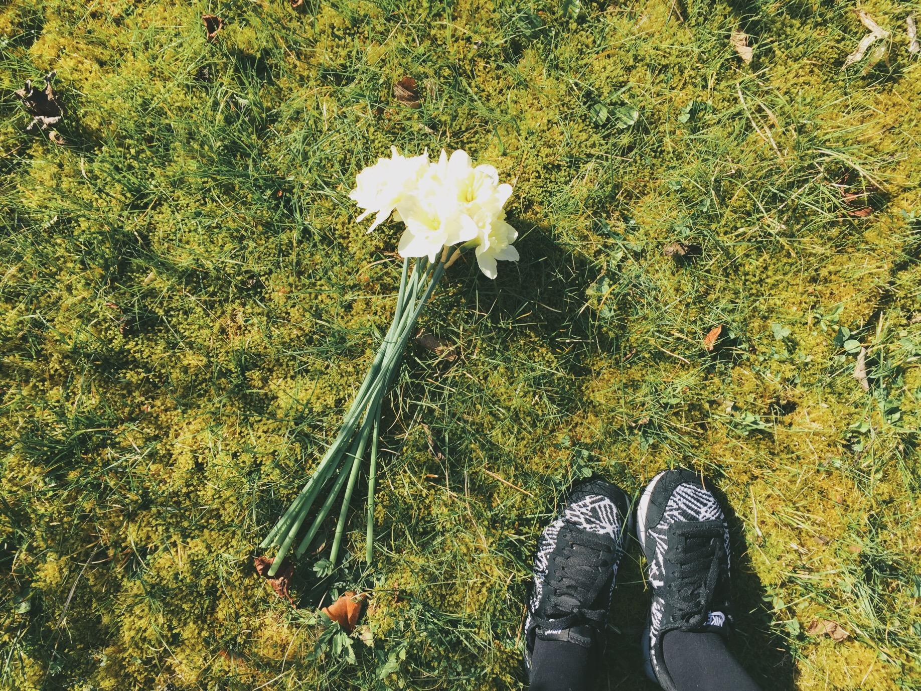 bouquet de jonquilles au sol