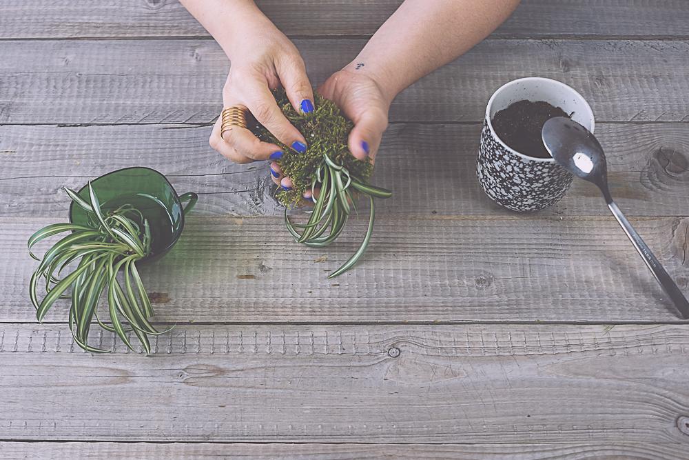 DIY suspension végétale - kokedama