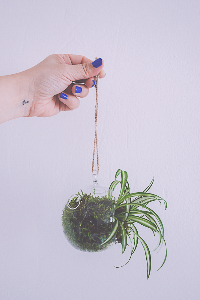 DIY suspension végétale - kokedama