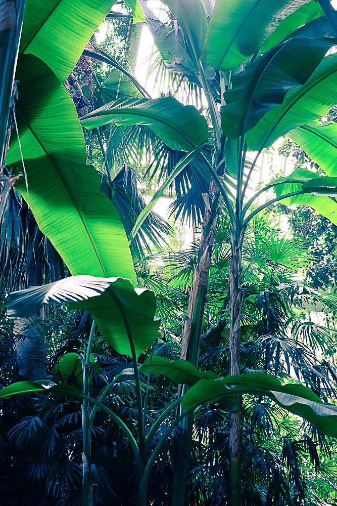 Les grandes serres du jardin des plantes paris planb for Jardin du plantes