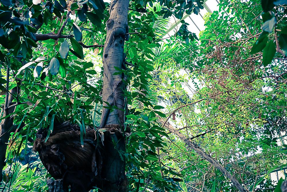D co castorama abri de jardin louhi vitry sur seine 2627 castorama niort catalogue - Castorama abri de jardin louhi toulon ...