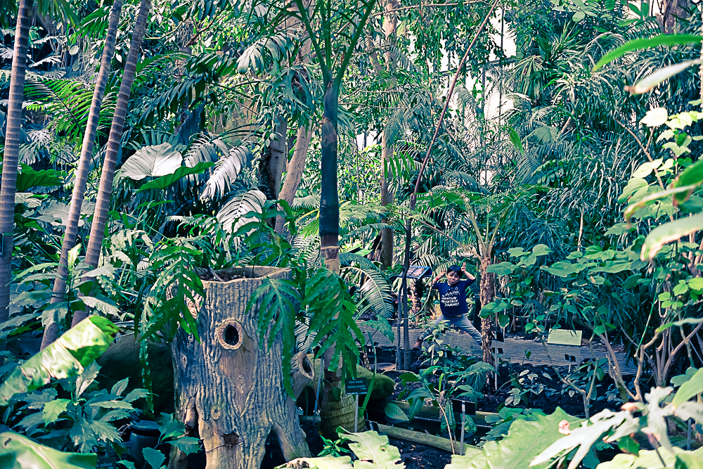 Les grandes serres du jardin des plantes paris planb par morganours - Les serres de jardin ...