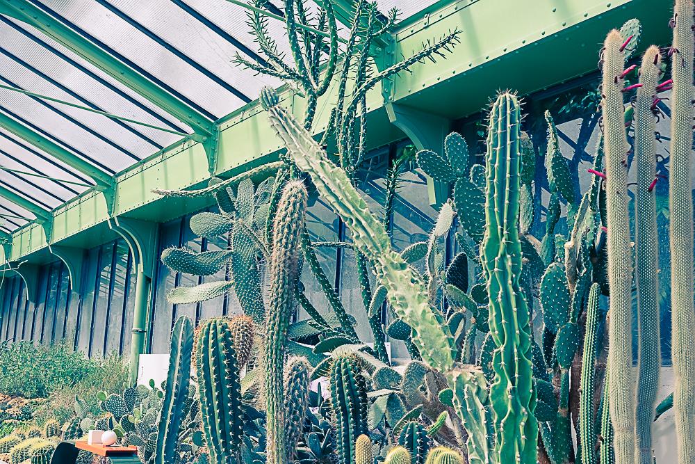 La grande serre du jardin des plantes - Paris -