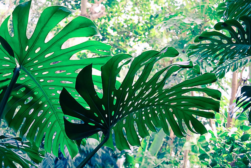 Les grandes serres du jardin des plantes - Paris - — planB par ...
