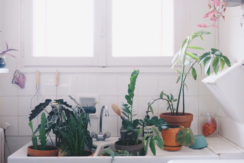 bain de plantes
