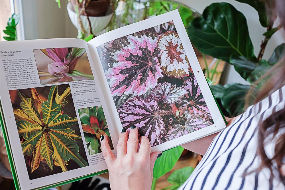guide des plantes d'intérieur - livre sur les plantes