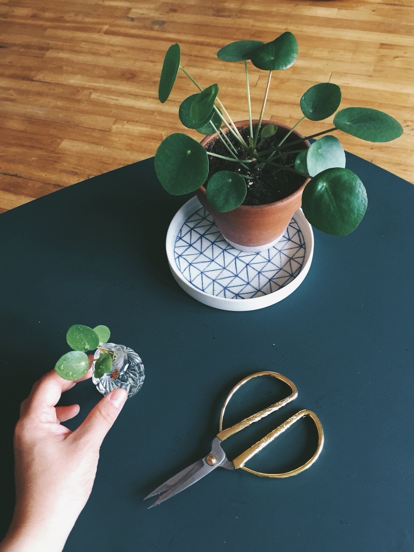 green intérieur et plantes vertes