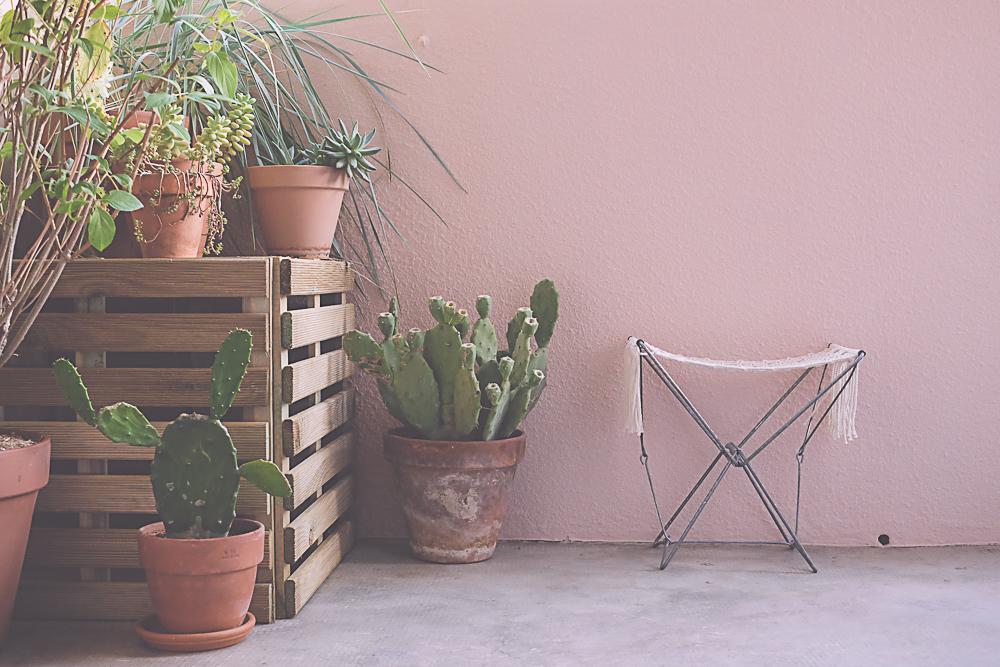 décoration balcon cactus et hortensia