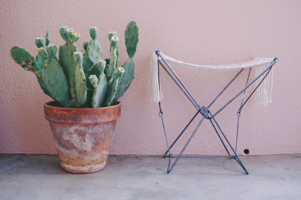 cactus et mur rose