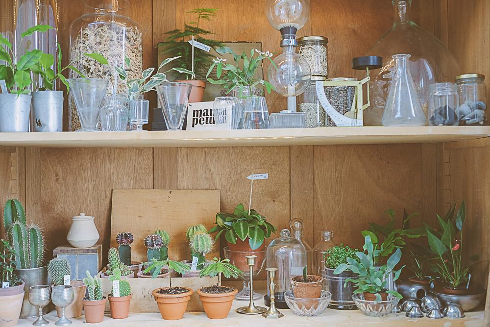 mamapetula, concept store végétal PARIS