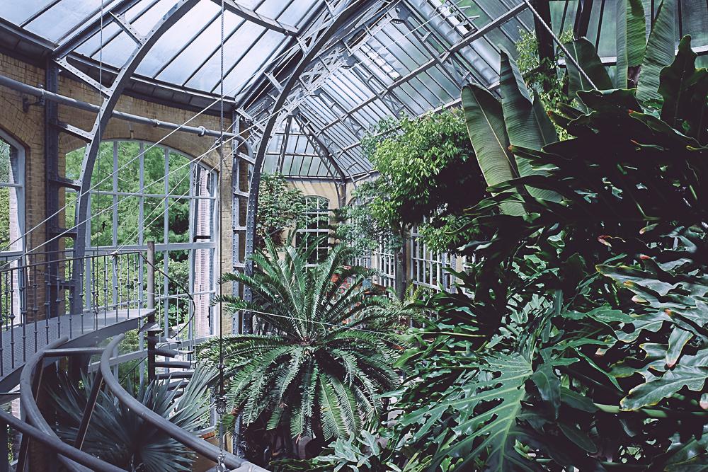 hortus botanicus Jardin botanique Amsterdam