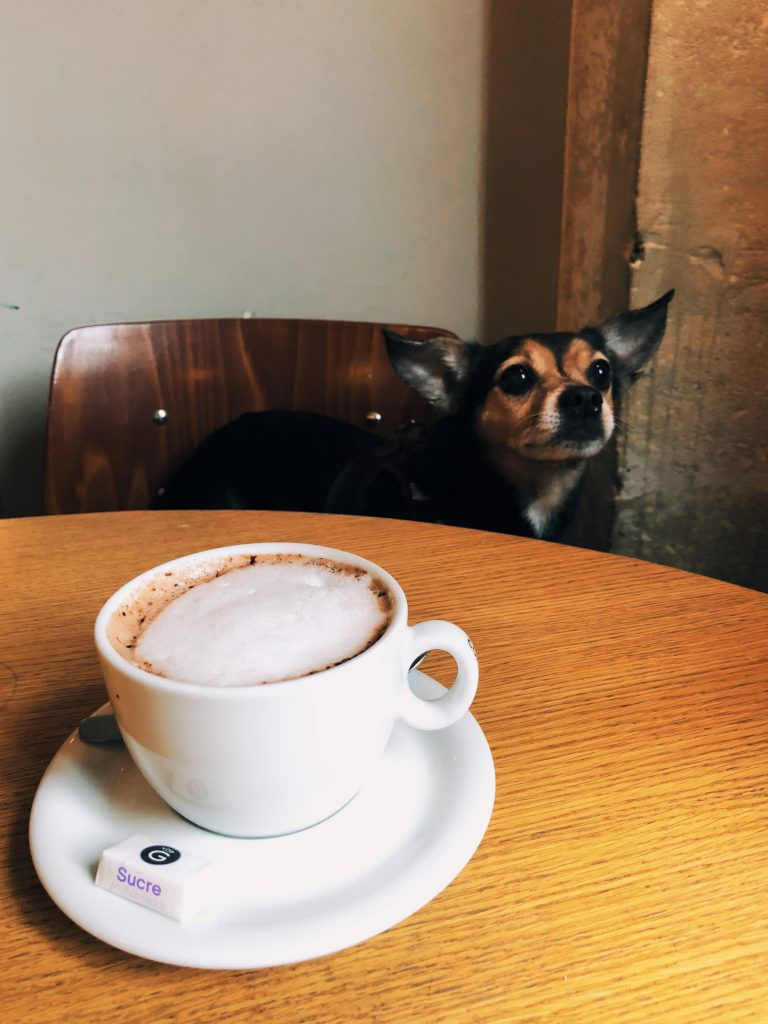 chien au café