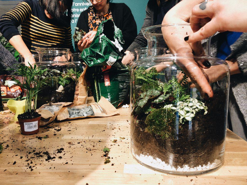 atelier plante truffaut toulouse