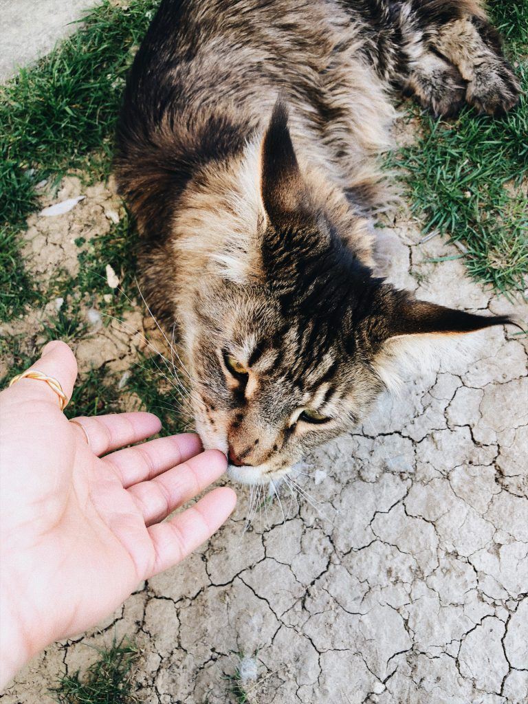 Alimentation du chat et campus Royal Canin