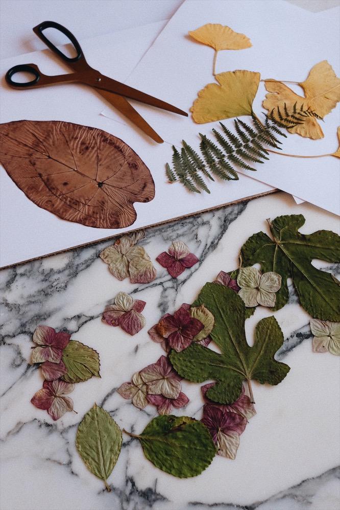 DIY planche botanique