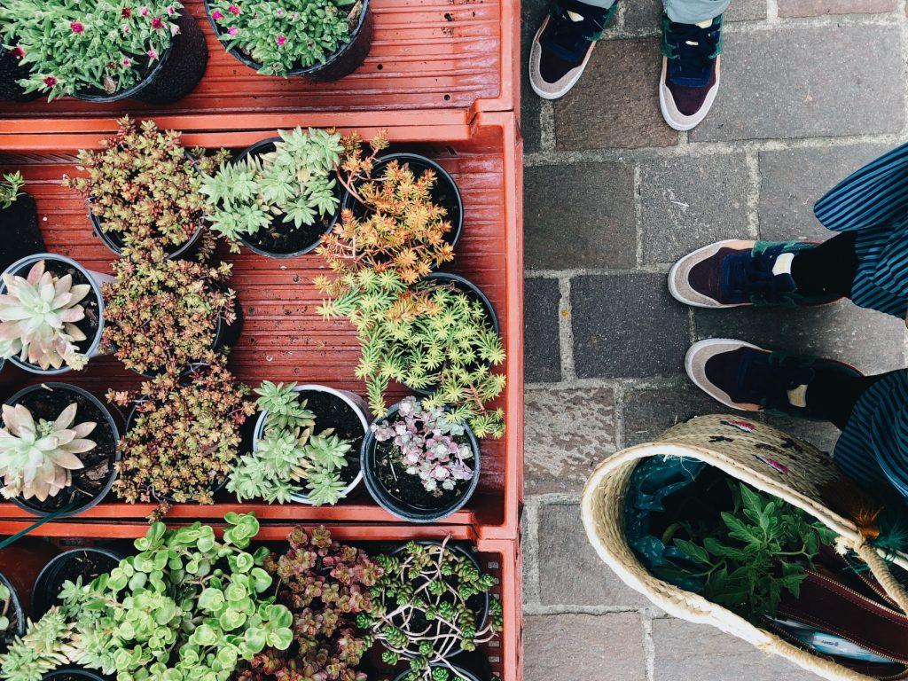 Foire aux plantes de Simorre