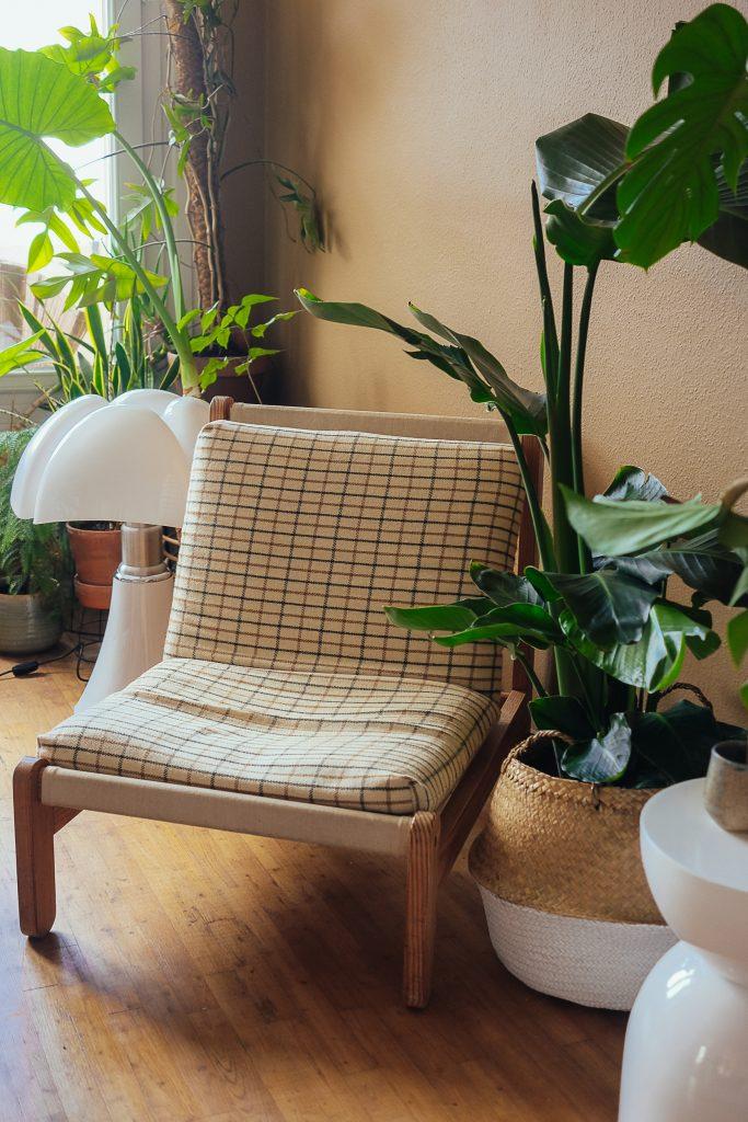 livraison de plantes vertes à Toulouse